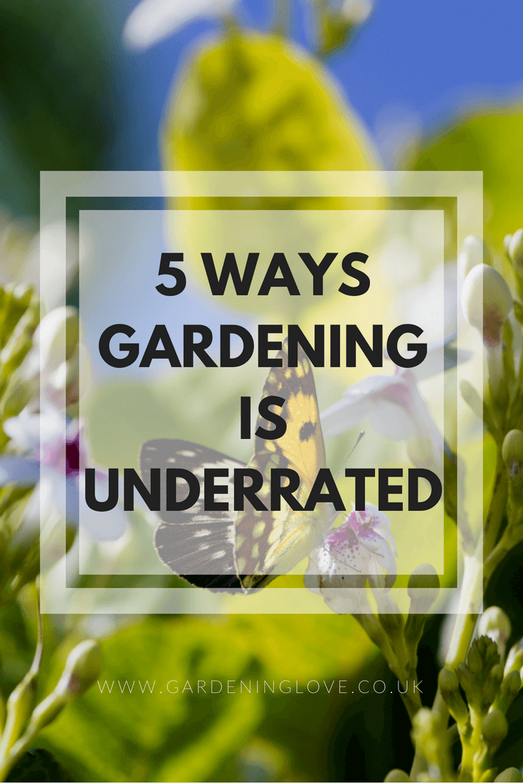 5 ways gardening is underrated. Gardening is suitable for all ages and abilities. Gardening benefits the mind, body and soul. #gardening #wellbeing #gardeningbenefits #ecotherapy #naturalhealth