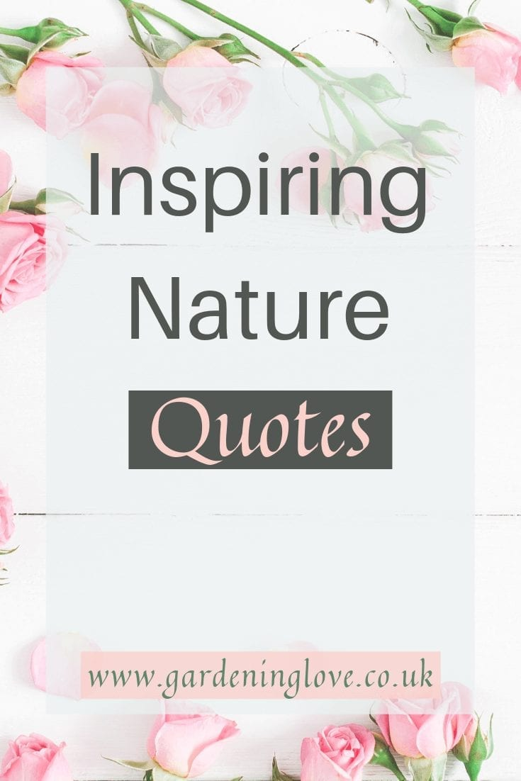 Inspiring nature quotes to fill your day with joy and positivity. Take inspiration from nature and the world around you. #quotes #nature #naturequotes #inspiringquotes #wordstoliveby #wordsofwisdom